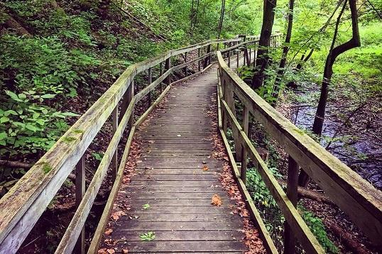 Outdoor Hiking Trails in London, Ontario – Longwoods Road Conservation Area