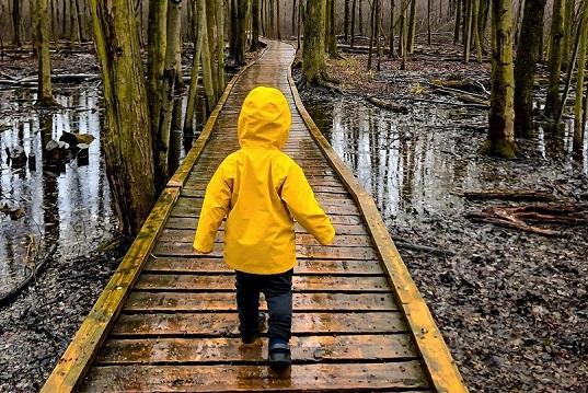 Outdoor Hiking Trails in London, Ontario – Sifton Bog