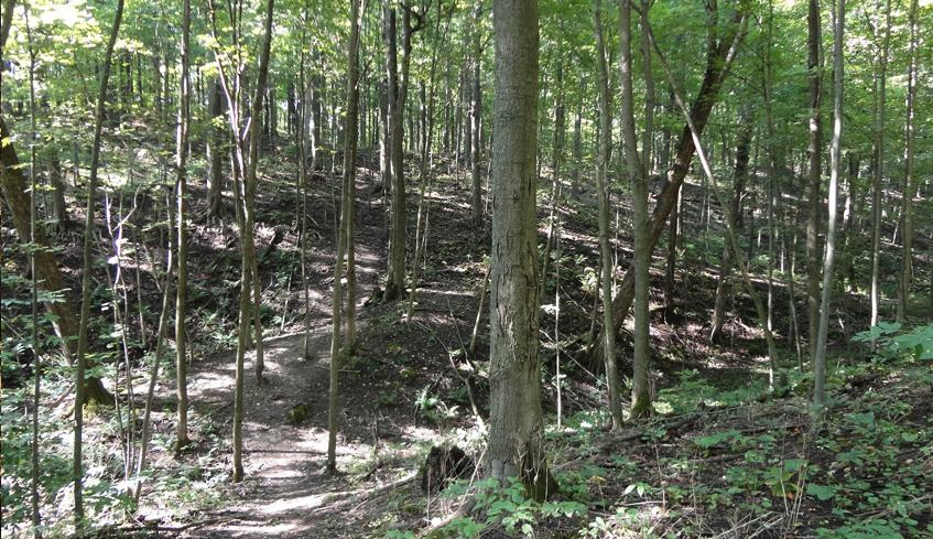 Outdoor Hiking Trails in London, Ontario – Warbler Woods