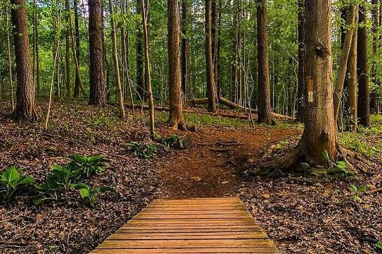 Outdoor Hiking Trails in London, Ontario – Kains Woods