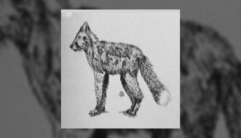 Pen and Ink Art Class Fox in Pointillism