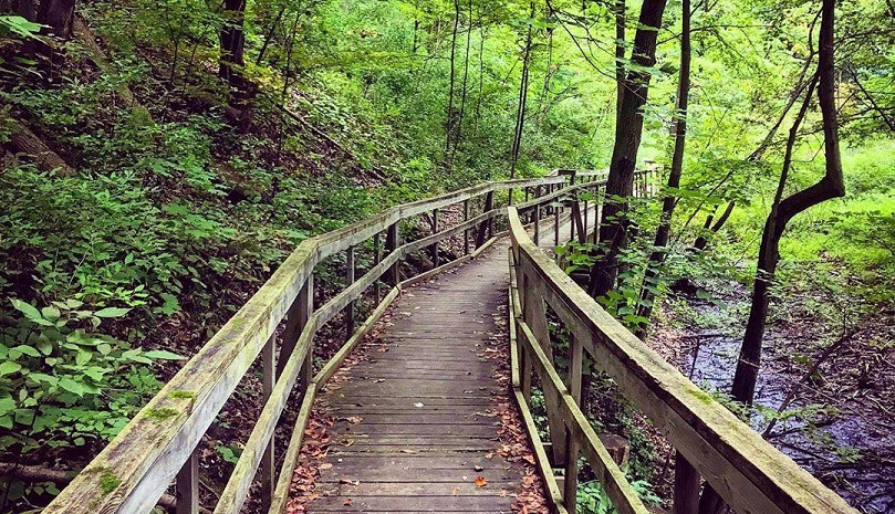 A winding bridge walkway leading through Longwoods Conservation Area trails