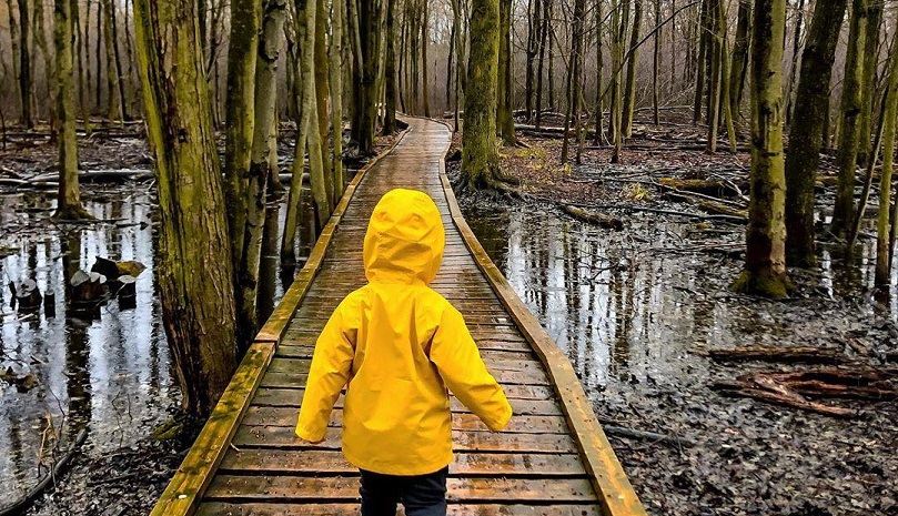 A child in a bright yellow rain jacket walking in Sifton Bog Environmentally Significant Area in London Ontario