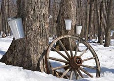 Kinsmen Fanshawe Sugar Bush Maple Festival