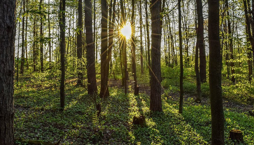 Sunlight through the forest at lower dingman