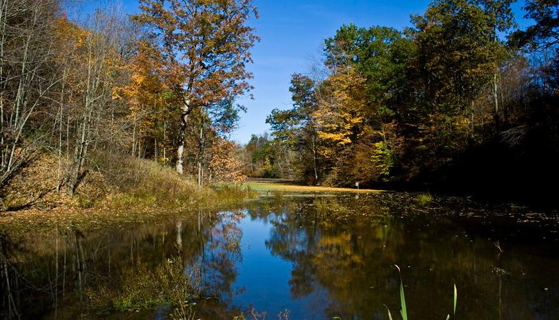 Longwoods Road Conservation Area