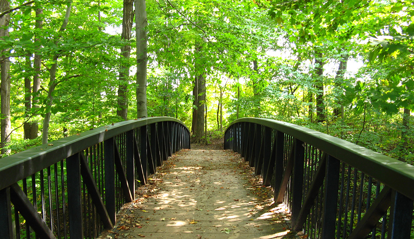 hiking trail in Meadowlily woods