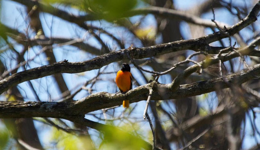 a bird on a branch in the coves forest